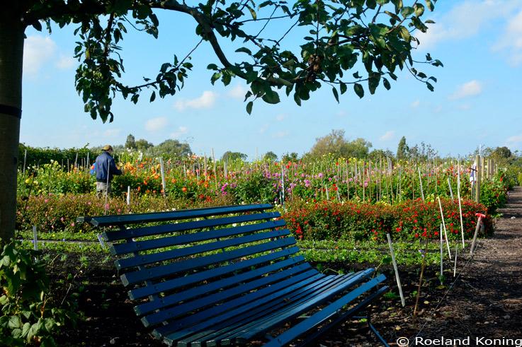 Historische Tuin Aalsmeer : Landelijke tuin aalsmeer vangenttuinen